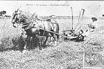 La moisson à Vitry-sur-Seine au début du XXe Siècle. © Archives municipales