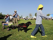 17-10-15-defile de chiens association copains des truffes-MA 10